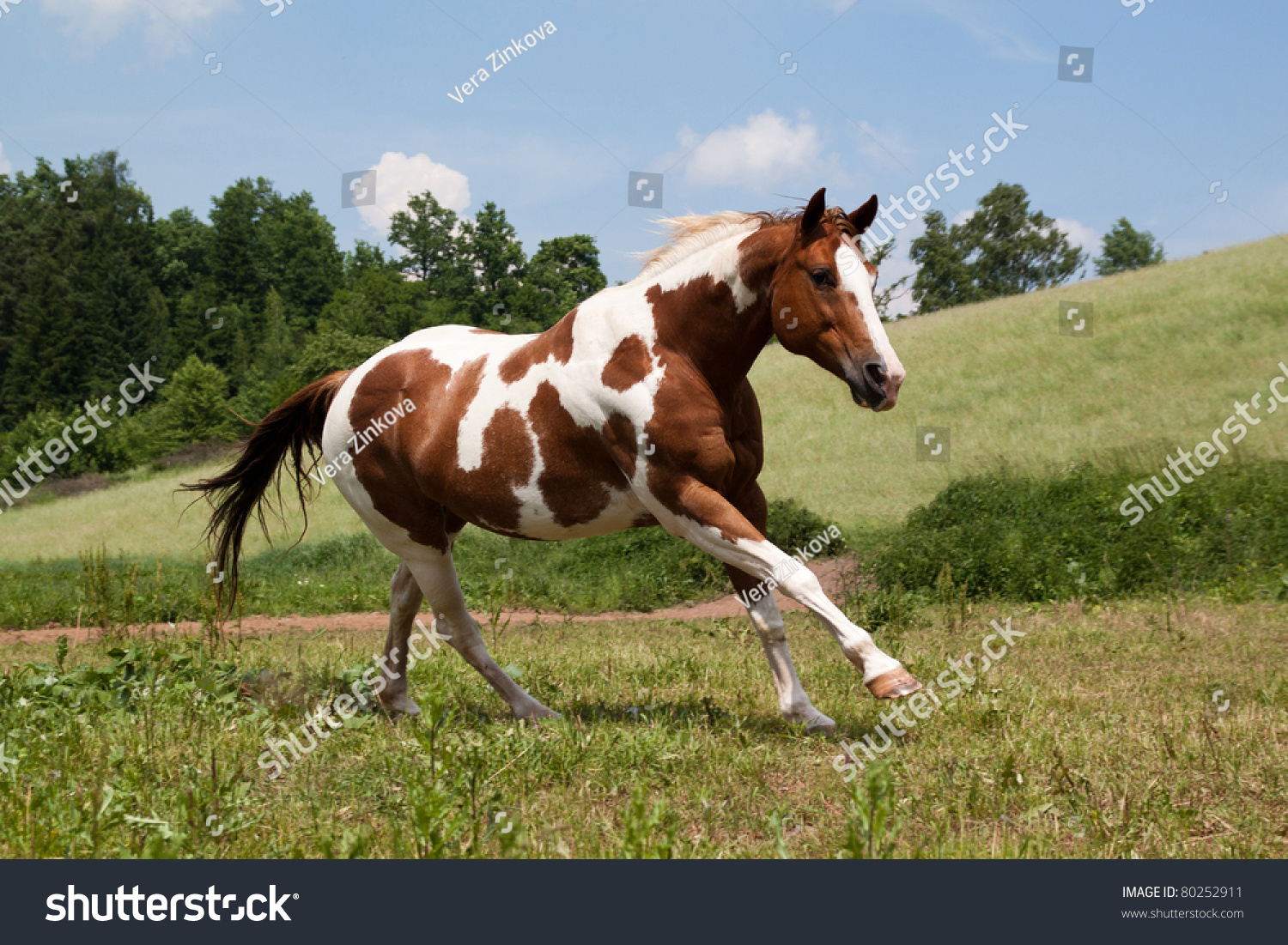 Paint Horses Running In A Field