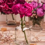 Red Hydrangea Flowers Pink Roses On Stock Photo Edit Now 1508978174