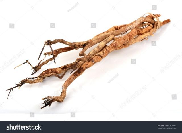 Image result for Longifolia Jack (Tongkat Ali)