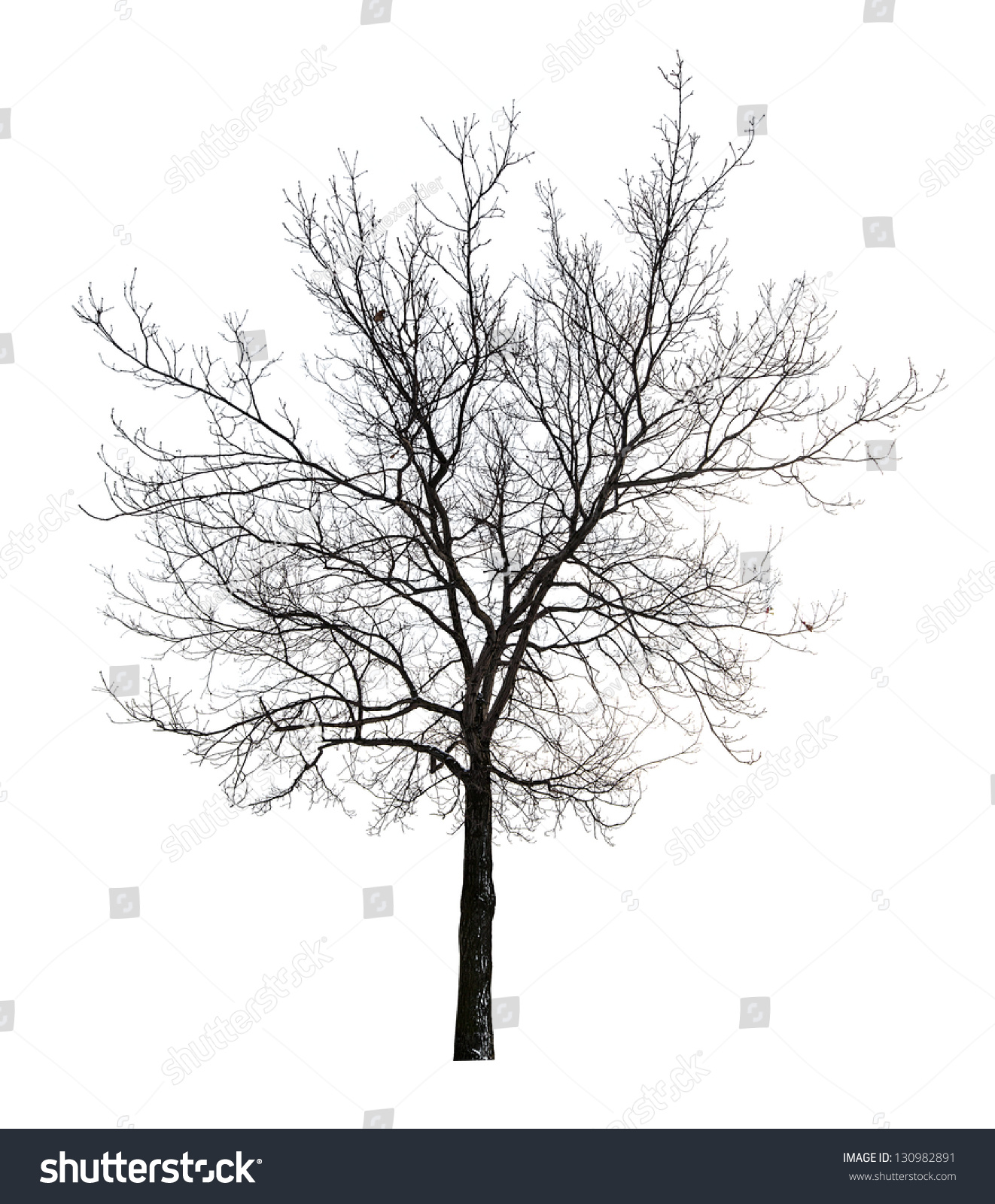 Tree Without Leaves Isolated On White Background Stock