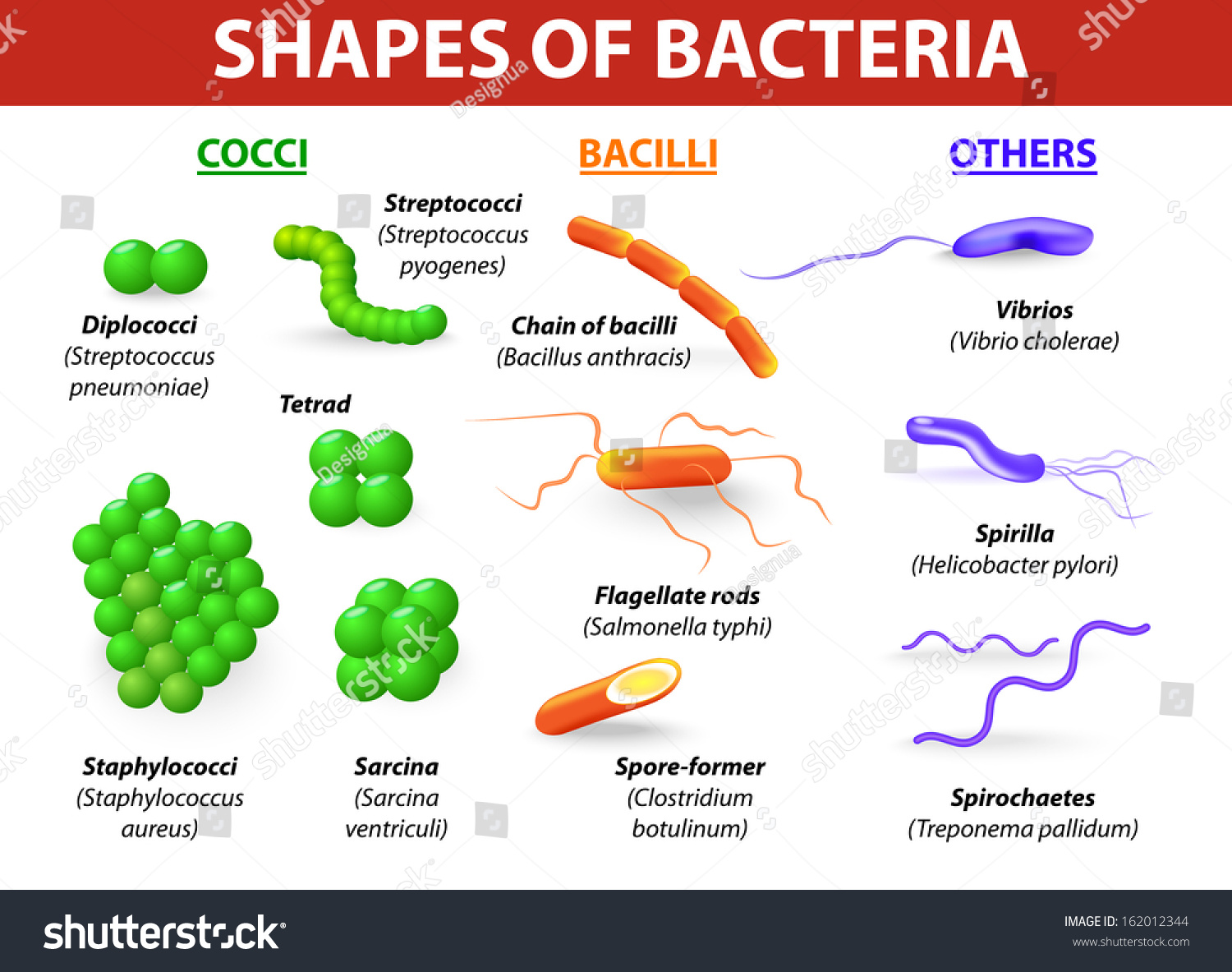 Types Bacteria Bacteria Classified Into 5 Stock