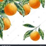 Watercolor Fruit Orange Branch Stock Illustration 233123032