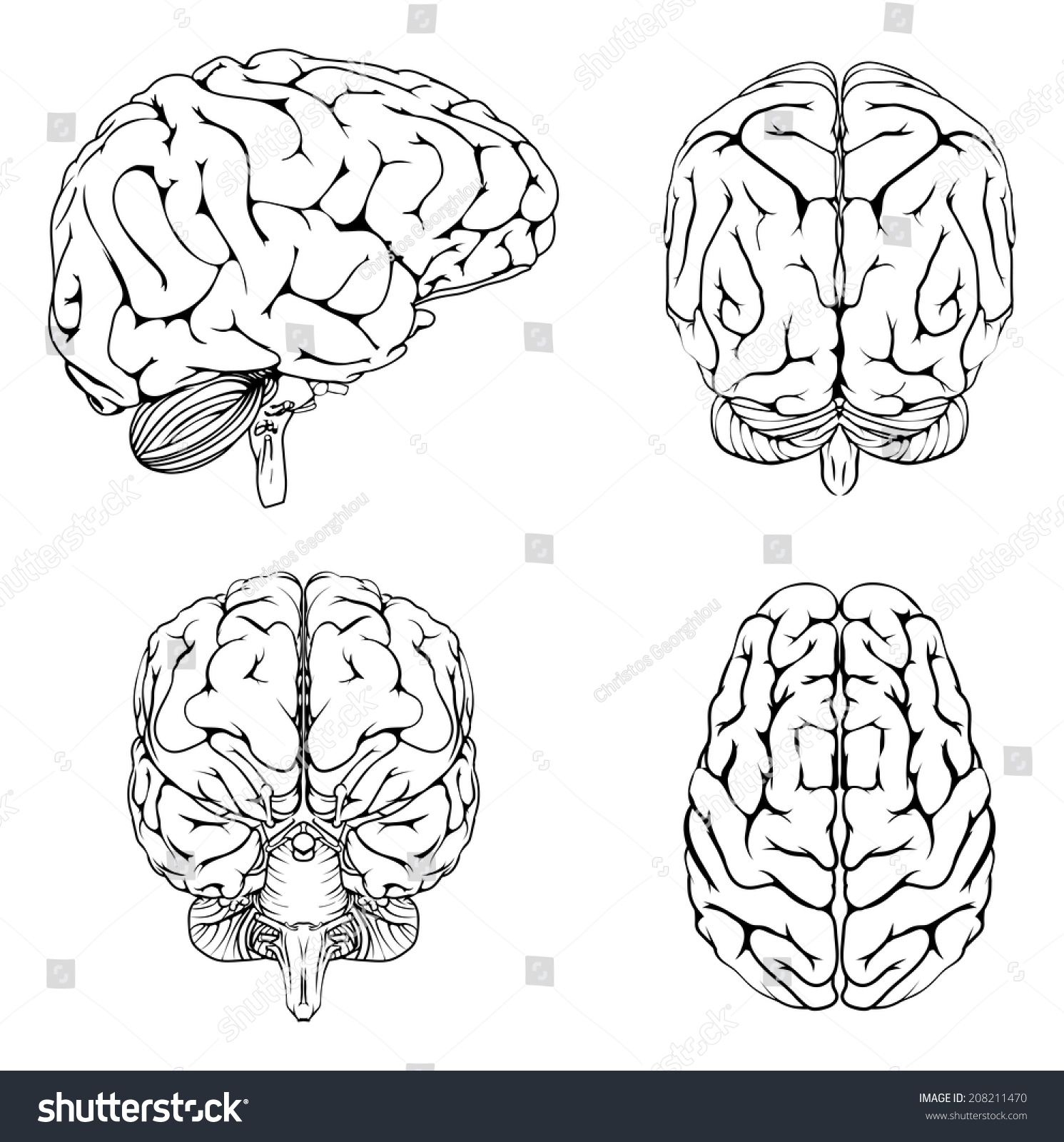 Diagram Brain Top Side Front Back Stock Vector