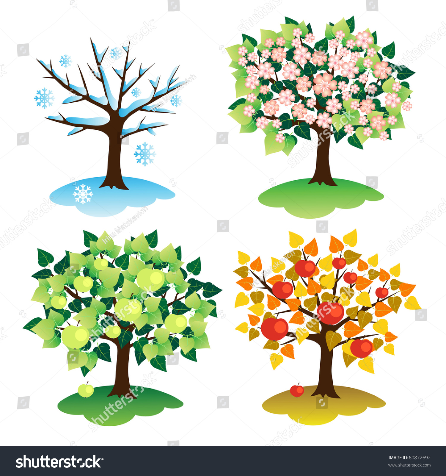 Pictures Of Apple Trees Through The Seasons