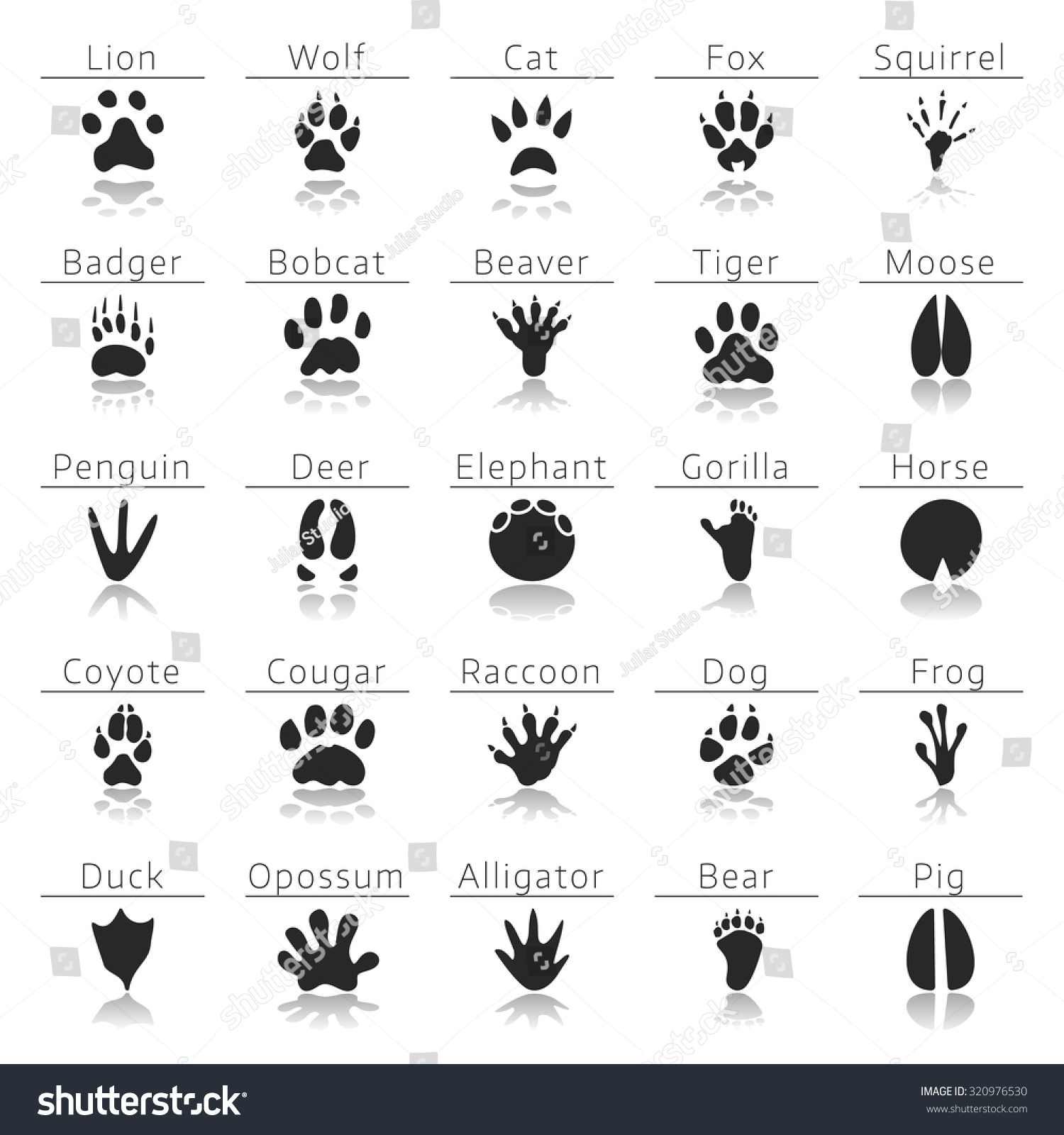 Animal Track Prints Set Animal Paws Animal Trails