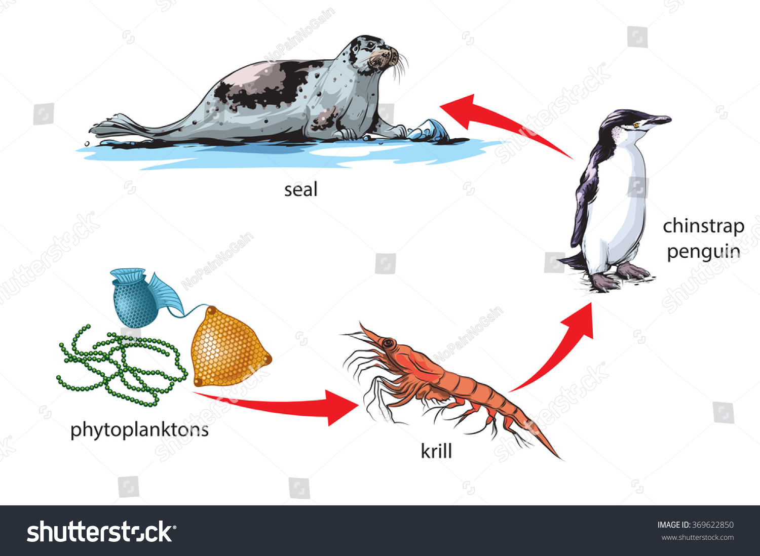 Antarctic Food Chain Example Stock Vector