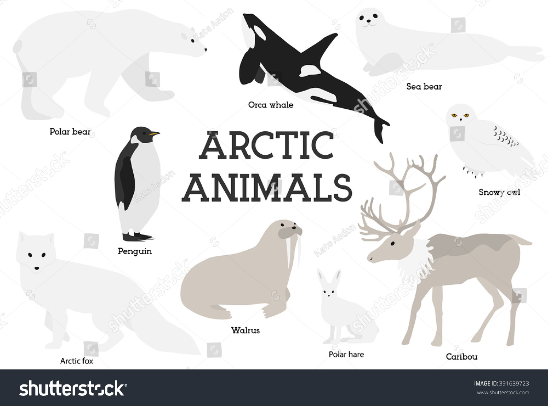 Arctic Animals Collection Set Flat Minimal Stock Vector