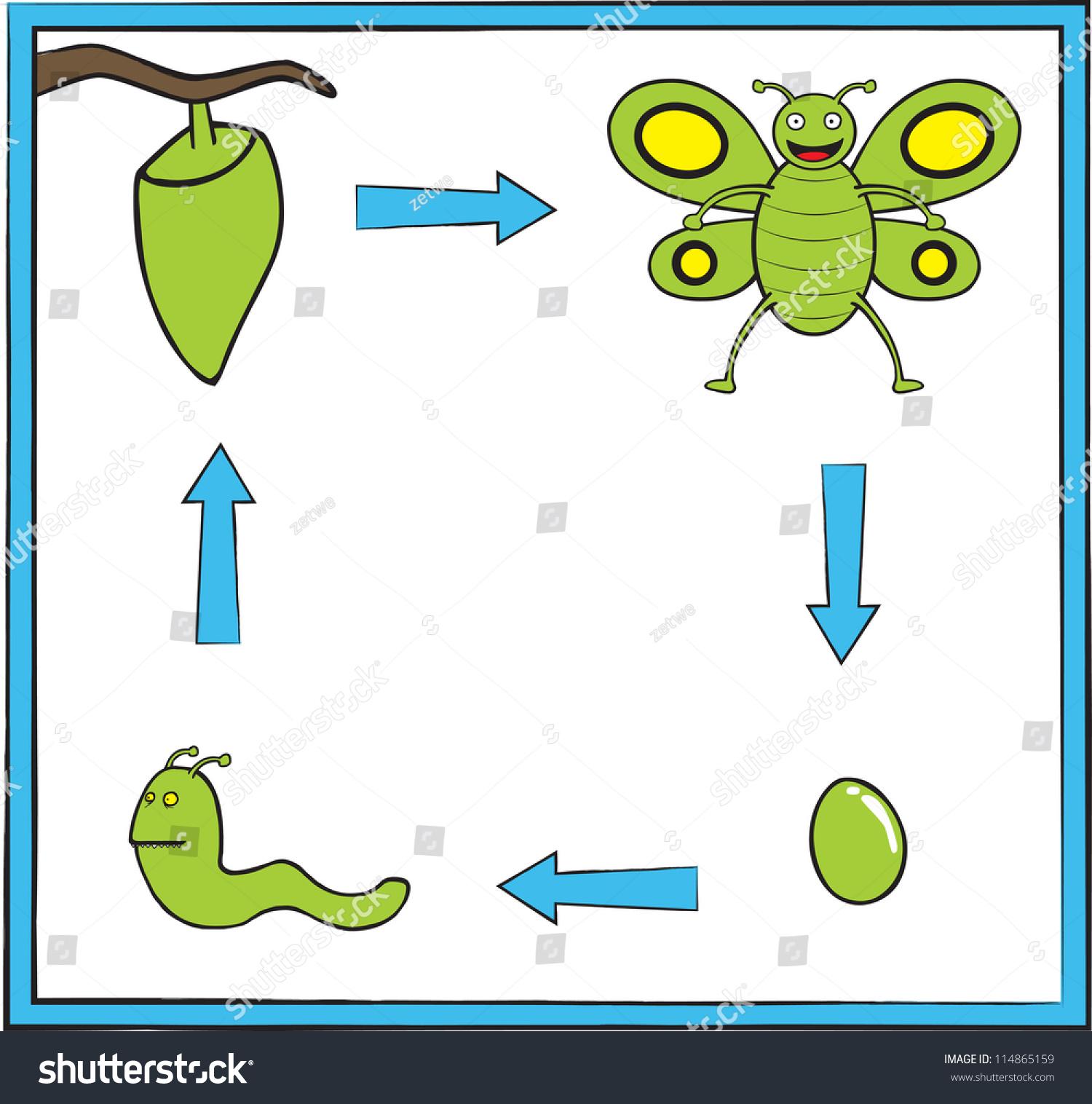 Butterfly Metamorphosis Stock Vector