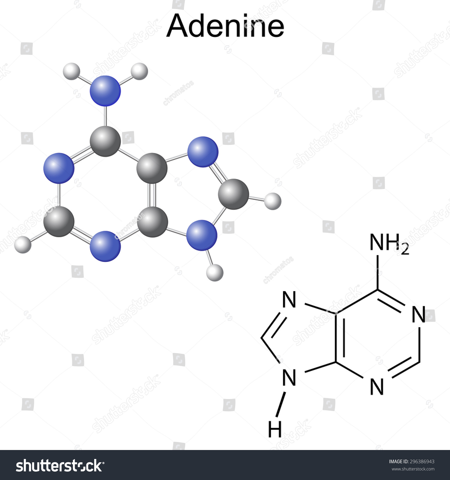Chemical Structural Formula Model Adenine Dna Stock Vector