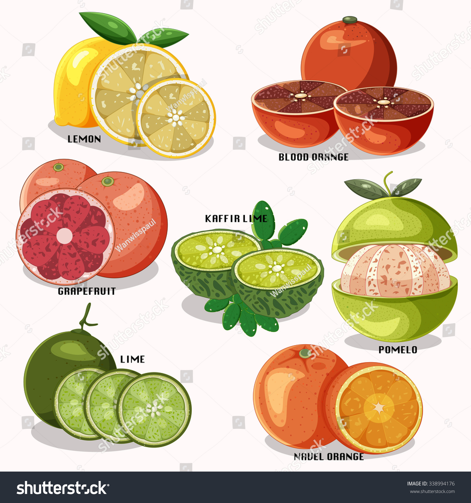 Citrus Fruits Name Isolated On White Stock Vector