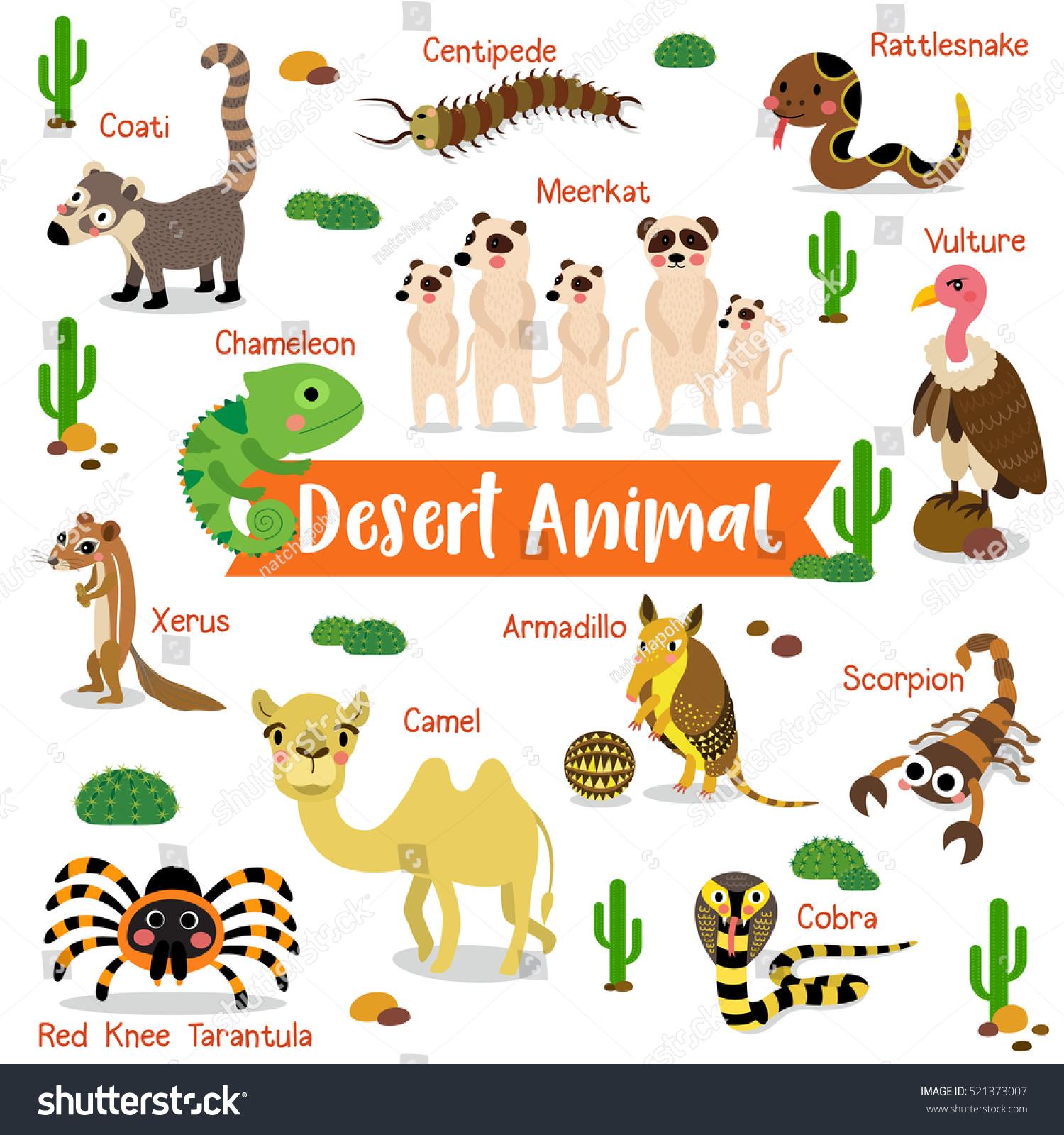 Desert Animals Cartoon On White Background With Animal