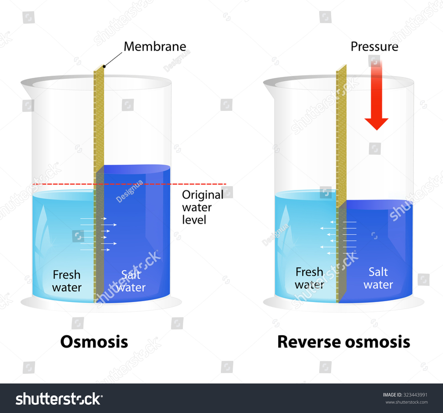 Difference Between Osmosis And Reverse Osmosis Water