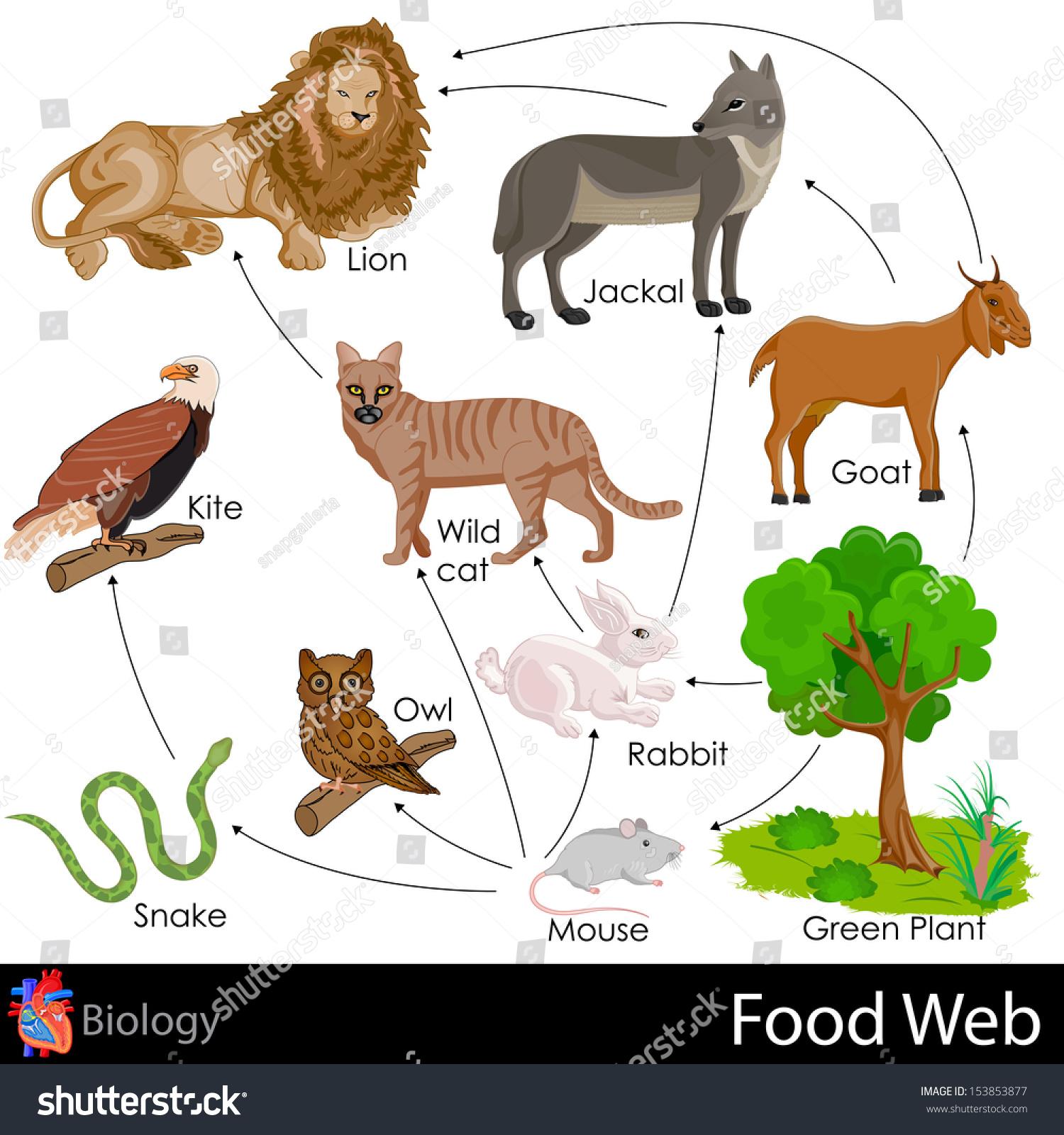 Easy Edit Vector Illustration Food Web Stock Vector