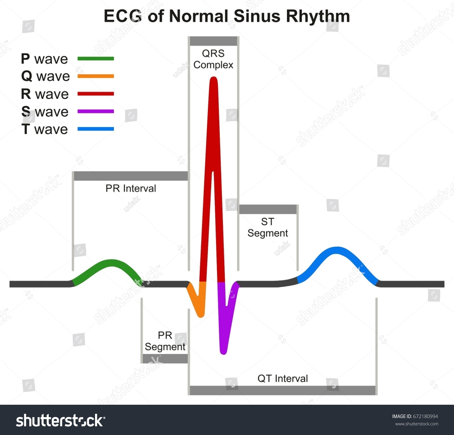 Ecg Normal Sinus Rhythm Infographic Diagram Image