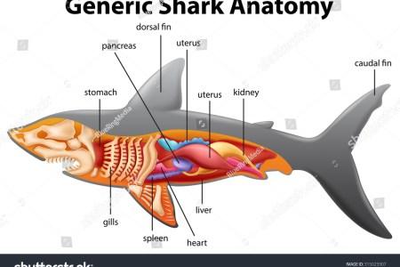 interior internal gills sharks » 4K Pictures | 4K Pictures [Full HQ ...