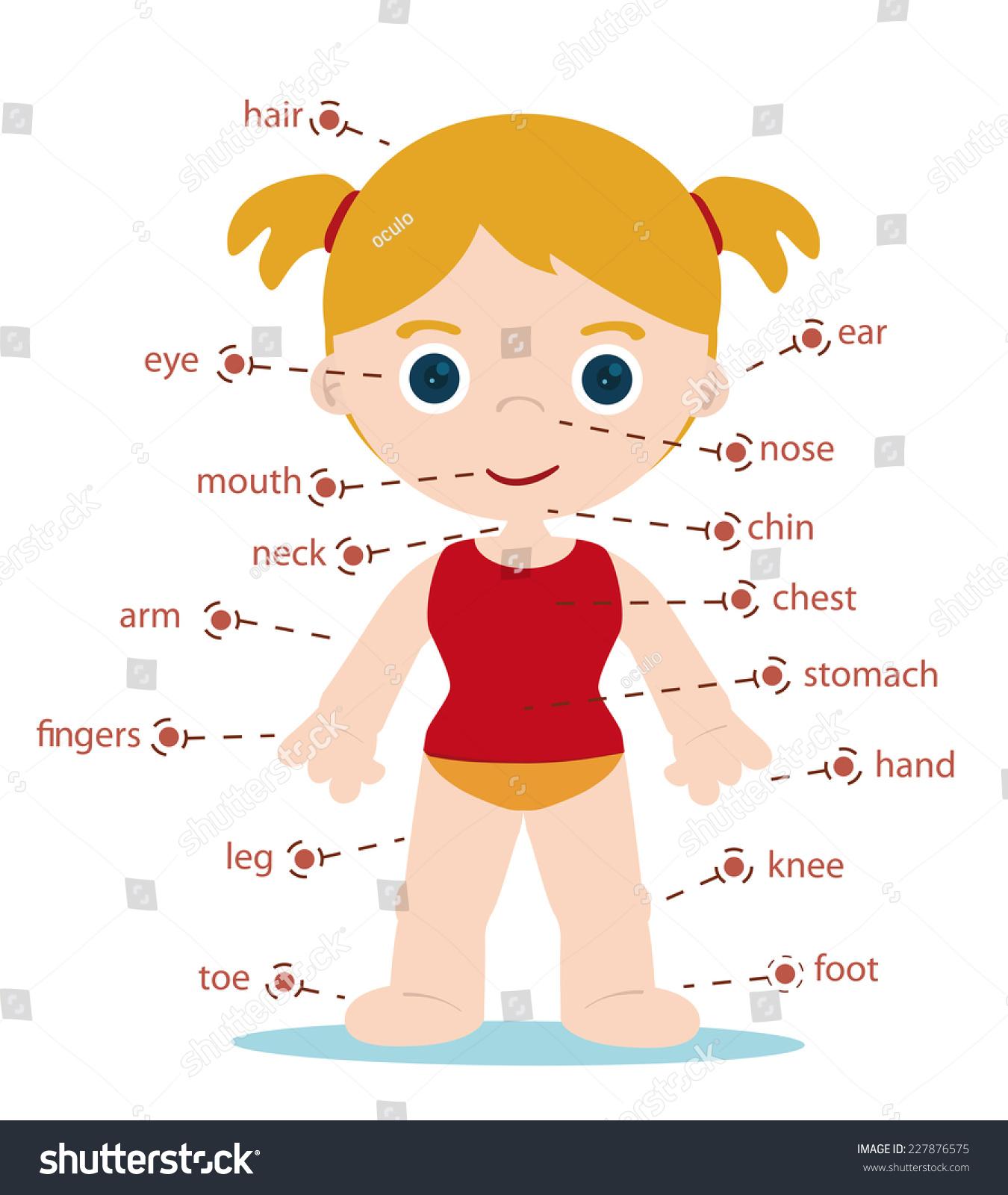 Girl Body Parts Chart For School Stock Vector Illustration