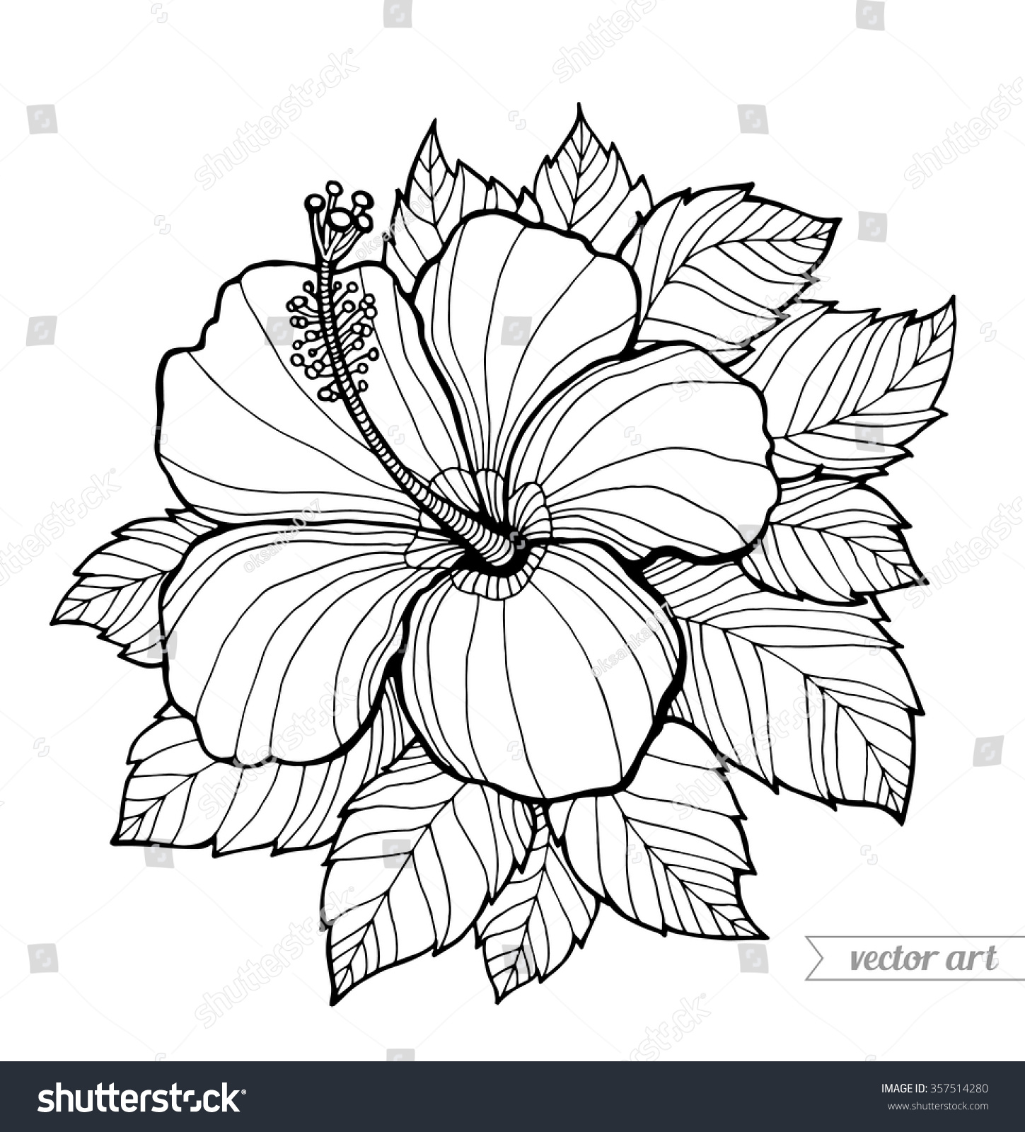 hibiscus flower picture coloring page color luna.html