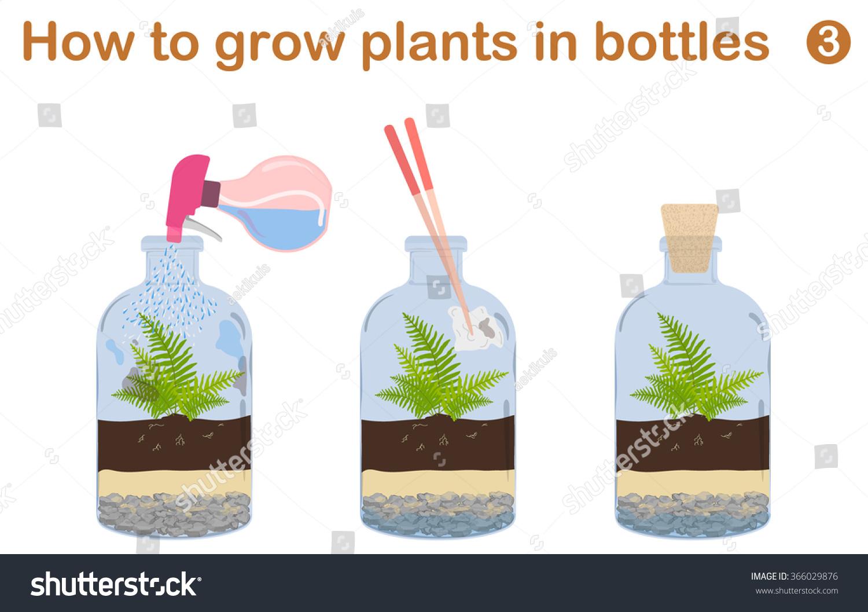 How Grow Plants Bottles Terrariums Tree Stock Vector