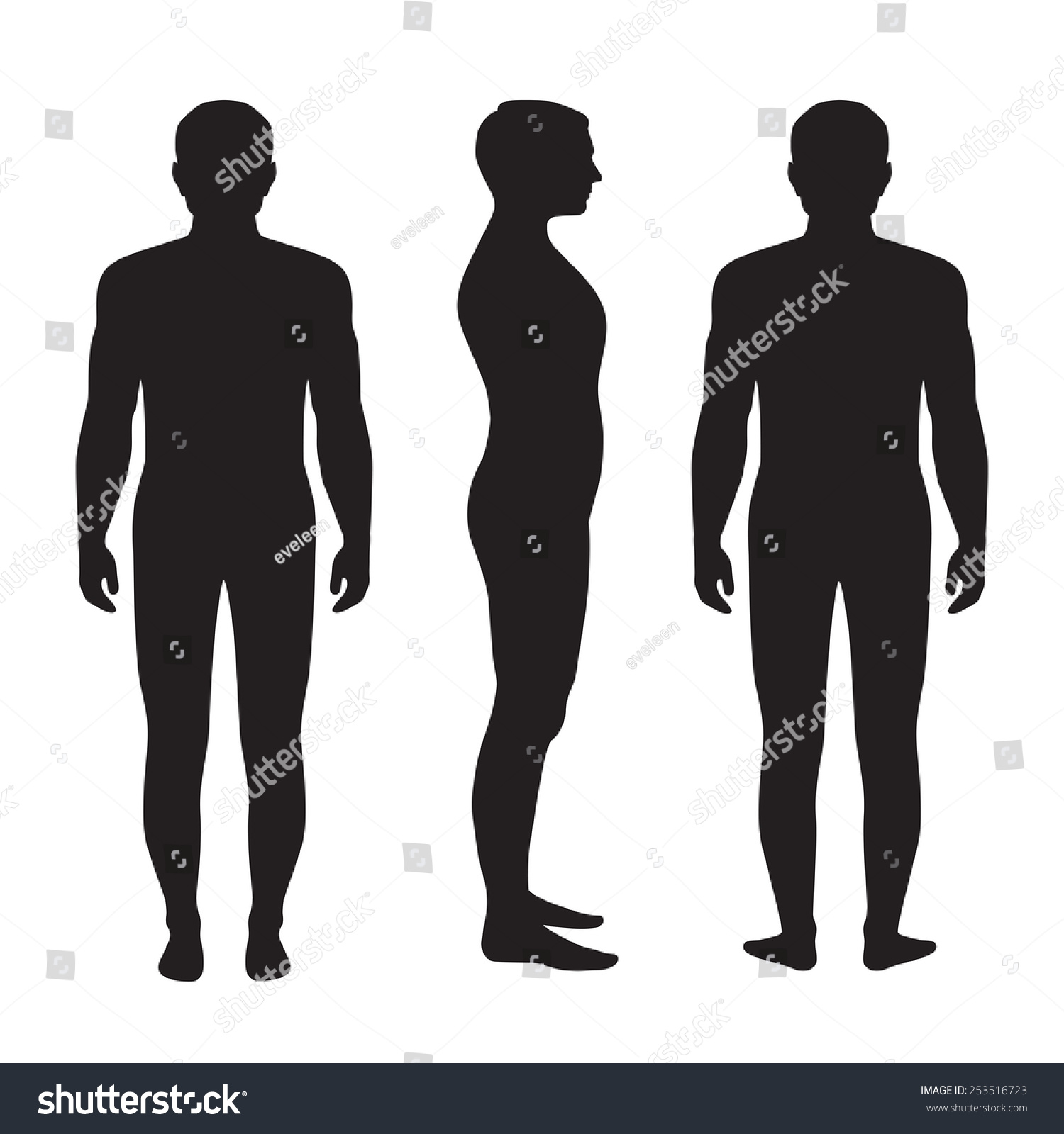 Human Body Anatomy Vector Man Silhouette Front Back Side