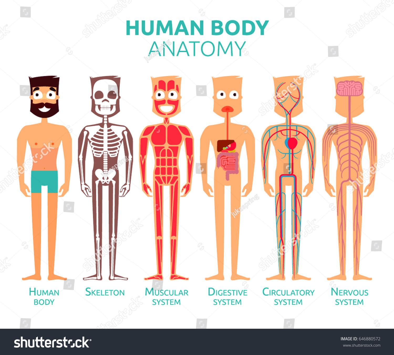 Human Body Cartoon Stylized Anatomy Vector Stock Vector