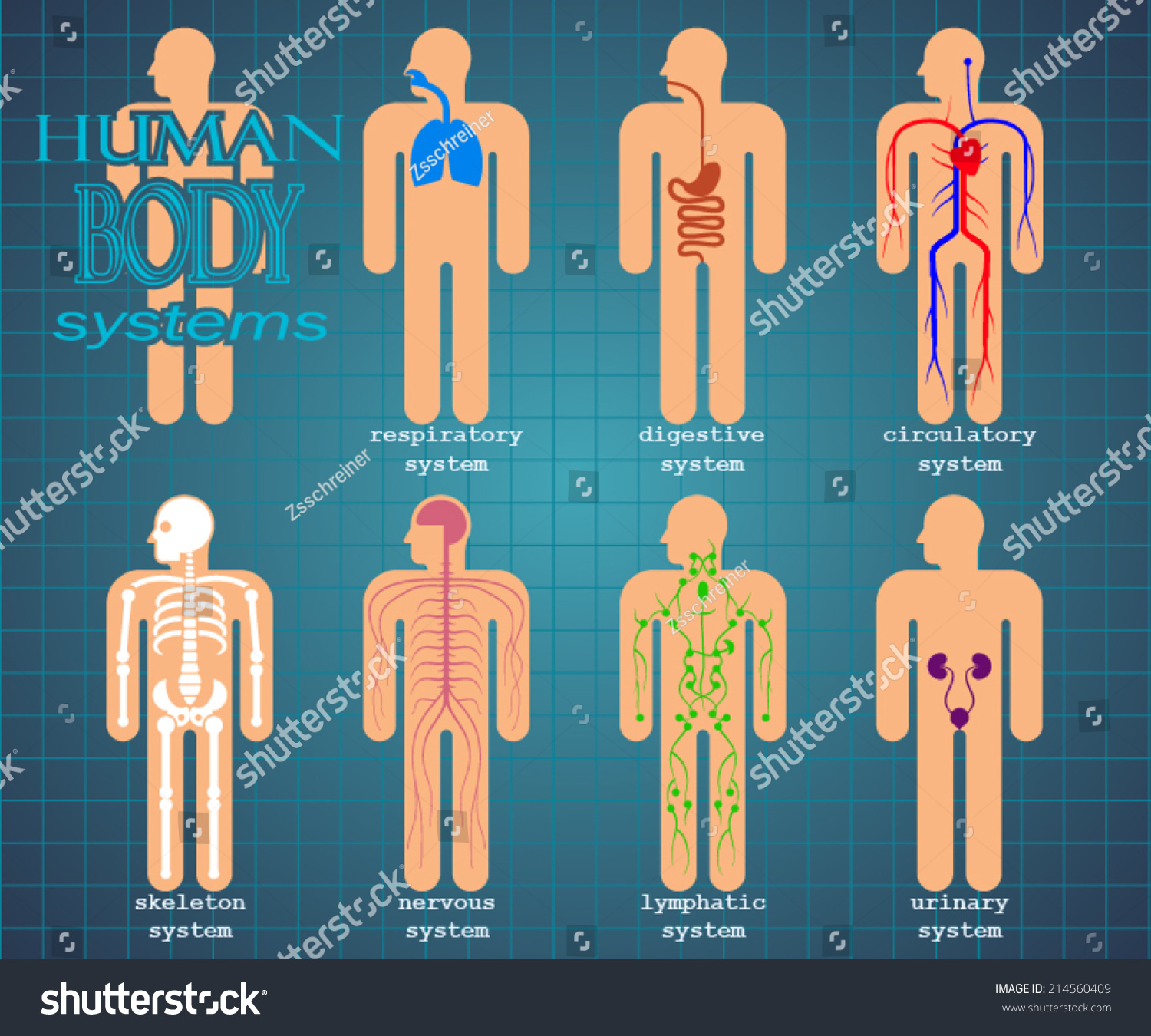 Human Body Systems Color Pictogram Vector Stock Vector