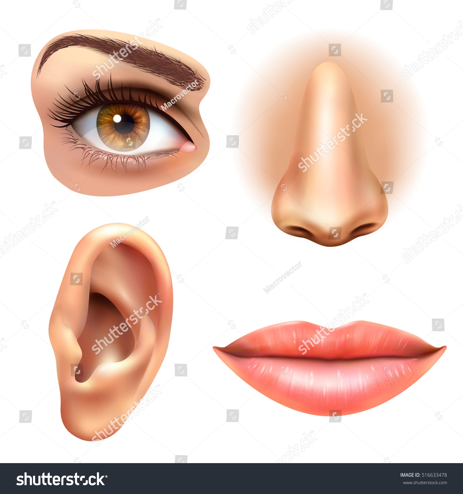 Human Face Parts 4 Sense Organs Stock Vector