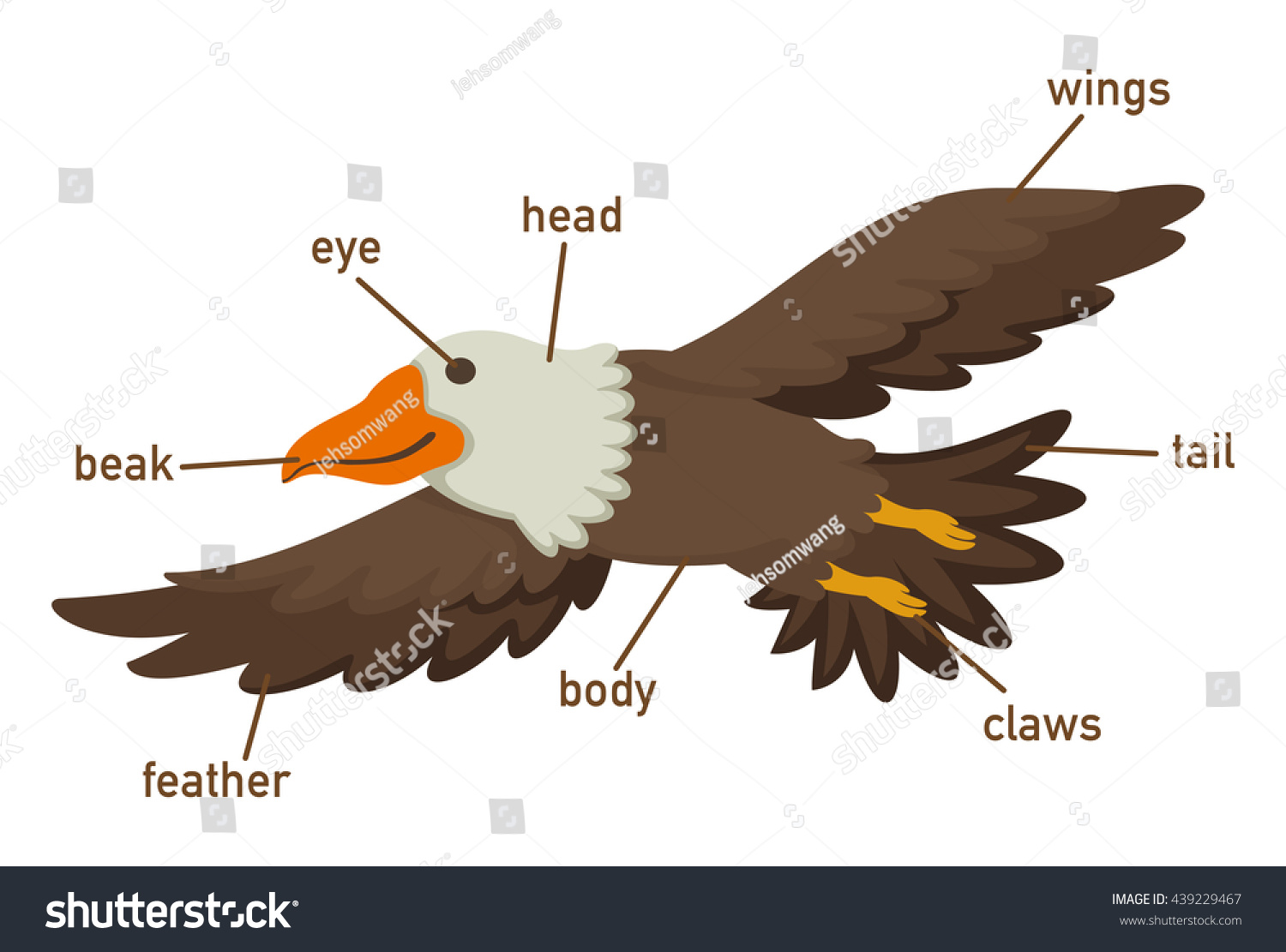 Illustration Eagles Vocabulary Part Body Vector Stock