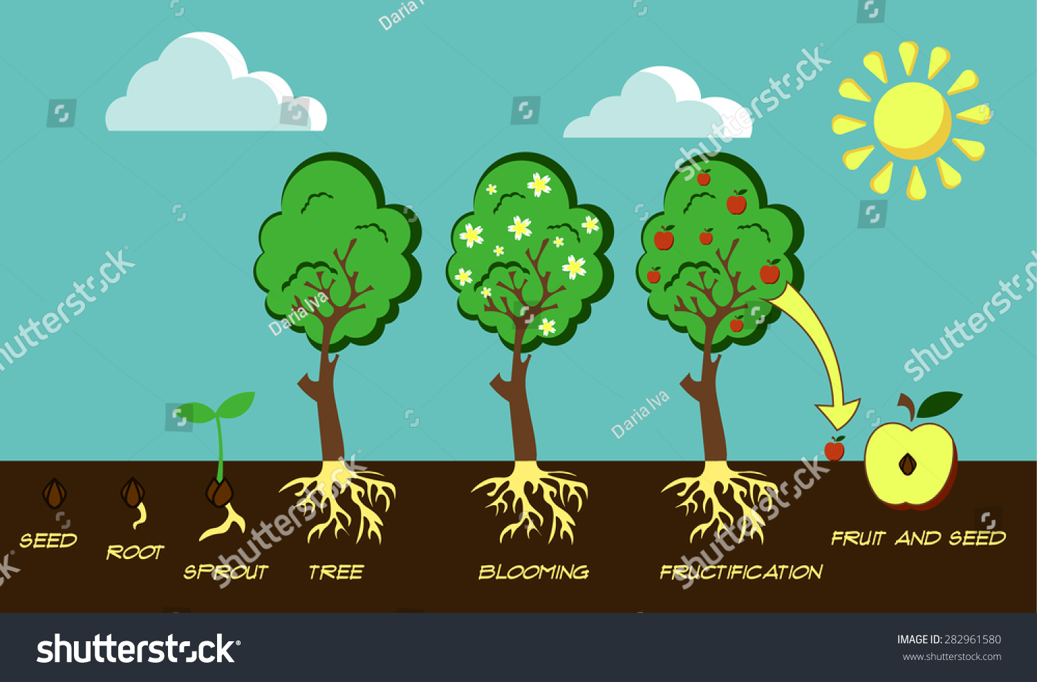 Illustration Life Cycle Tree From Seed Stock Vector