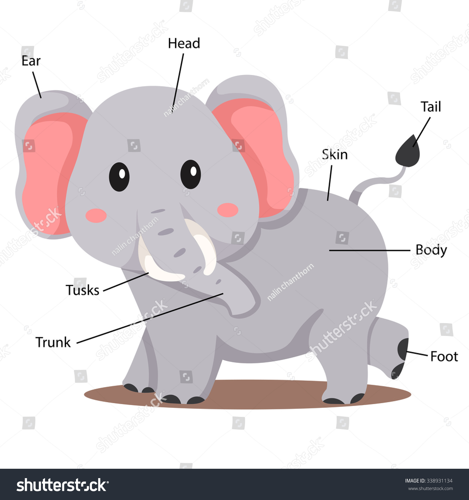 Illustrator Elephant Body Part Stock Vector