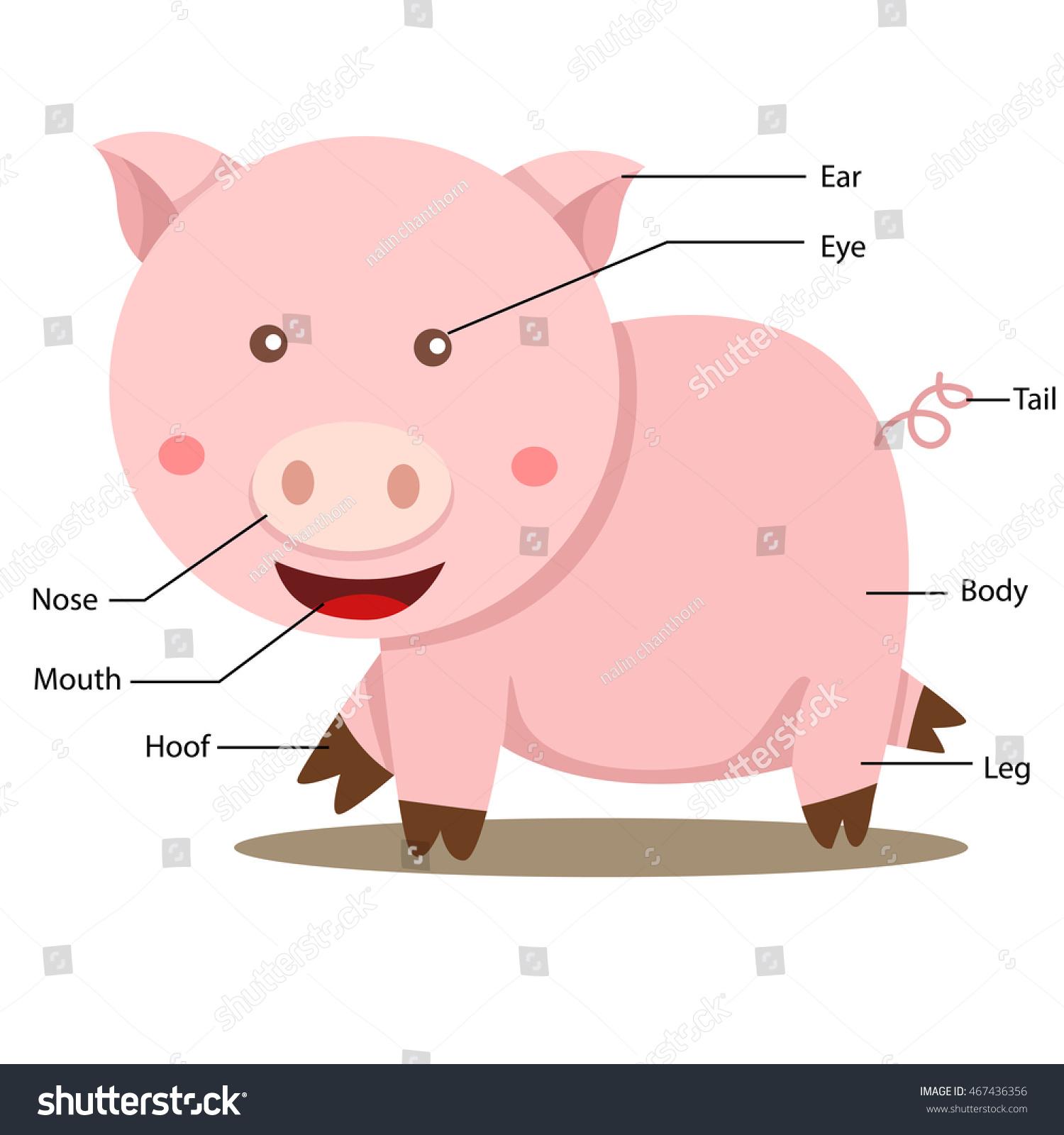 Illustrator Pig Body Part Stock Vector