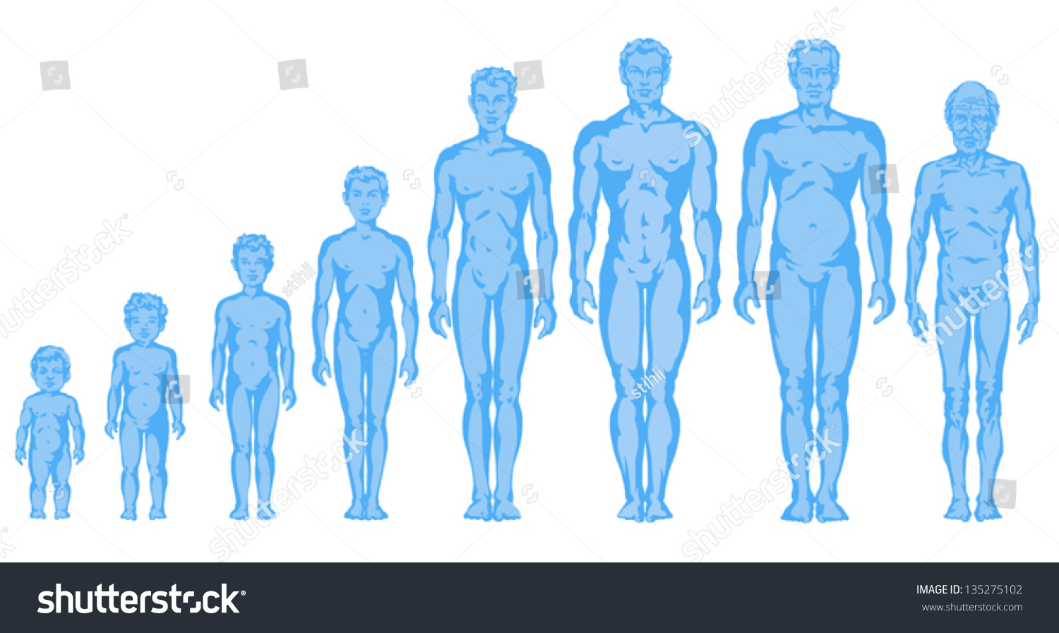 Increasing Male Body Shapes Proportions Of Man Child