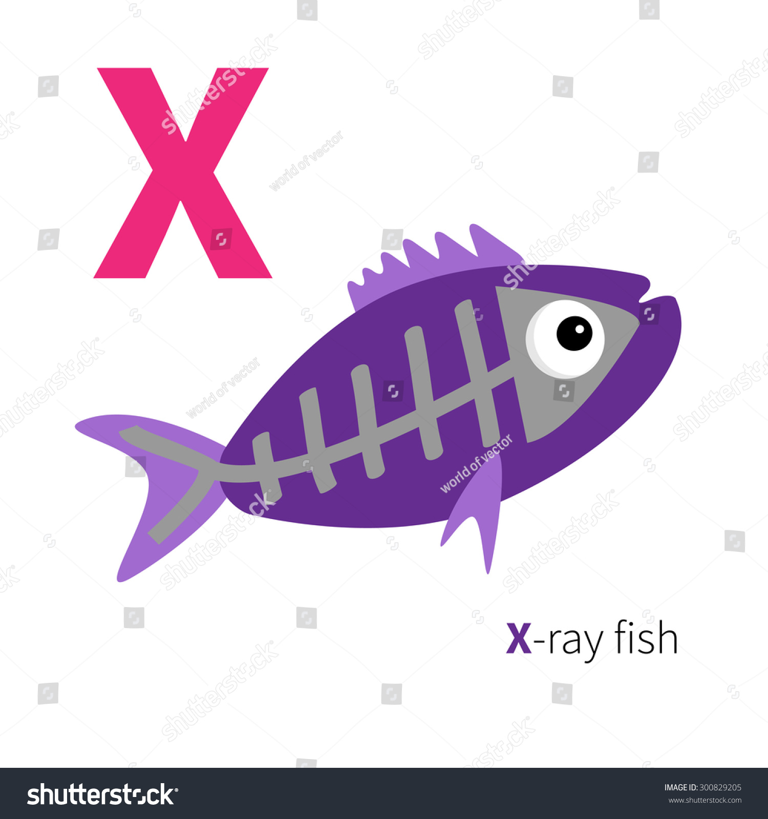 The Gallery For Gt X Ray Fish Clipart
