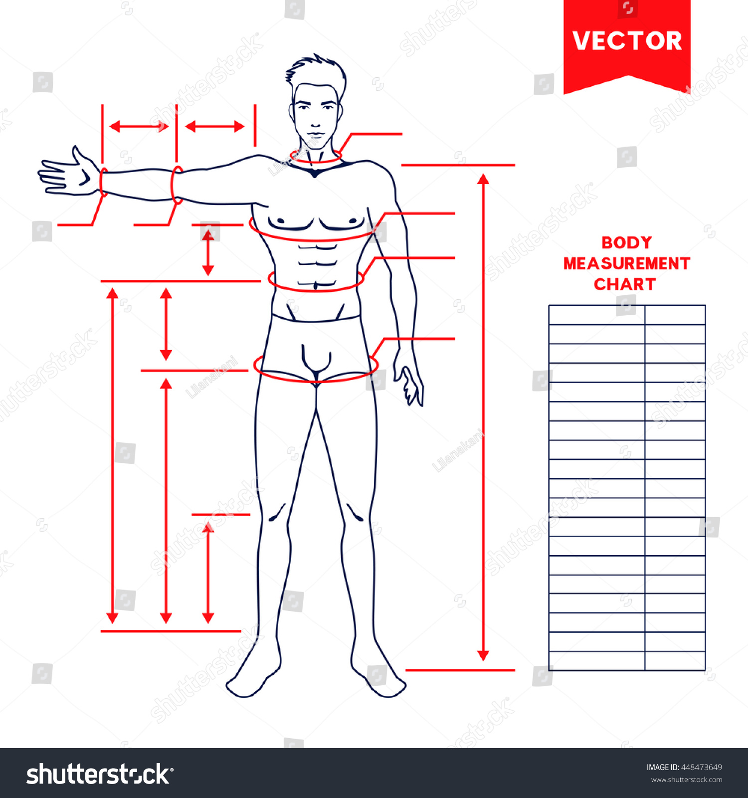 Male Body Measurement Chart Scheme Measurement Stock