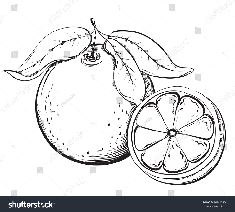 Orange Hand Drawn Fruit Sketch Vector Stock Vektorgrafik