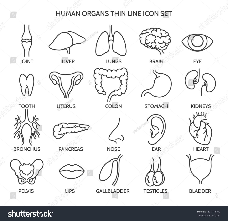 Tooth Id Number Worksheet