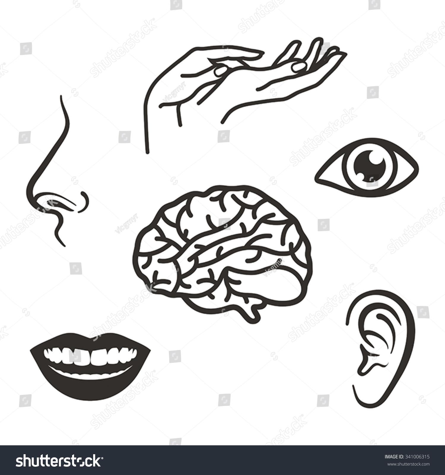 Parts Face Body Five Senses Stock Vector