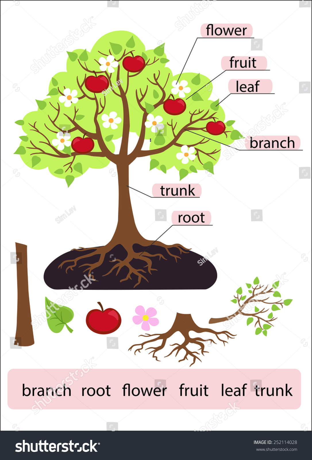 Parts Of A Tree Diagram