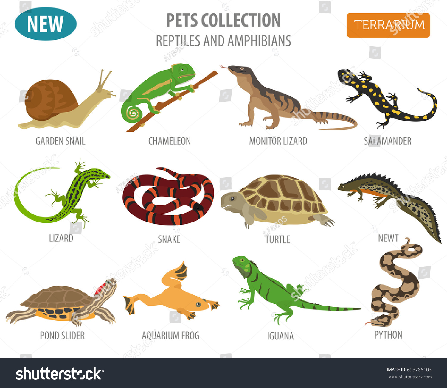 Pet Reptiles Amphibians Icon Set Flat Stock Vector