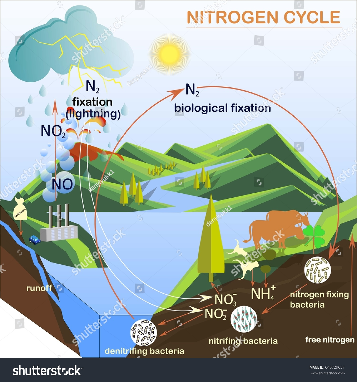 Scheme Nitrogen Cycle Flats Design Vector Stock Vector