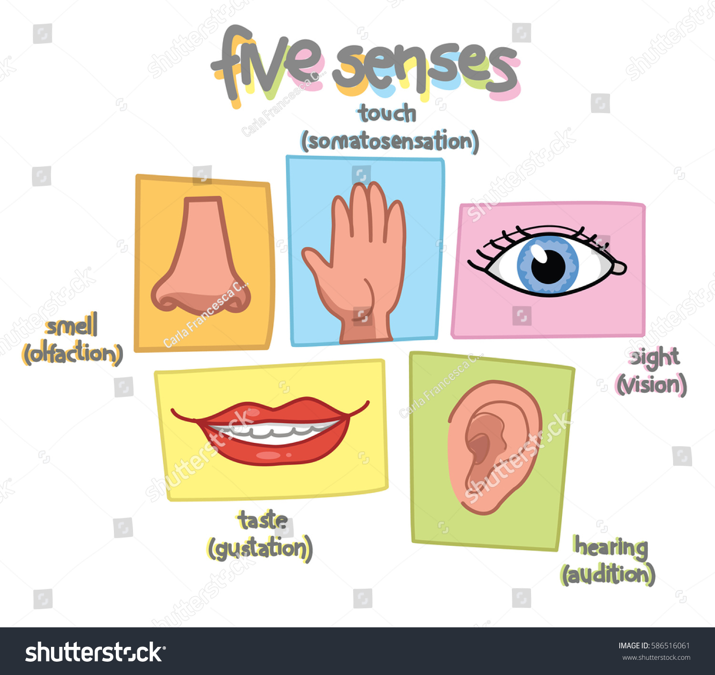 Senses Illustration Sight Hearing Taste Smell Stock Vector