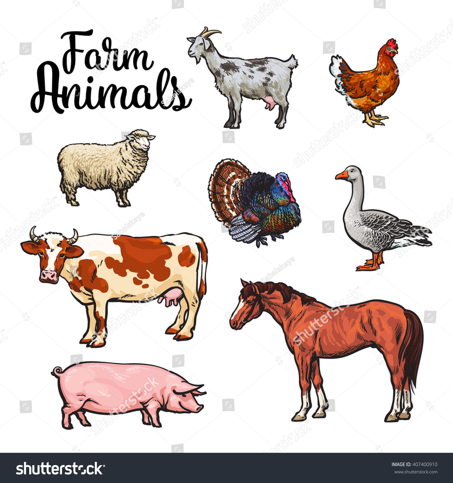 Set Farm Animals All Growth Colored Stock Vector