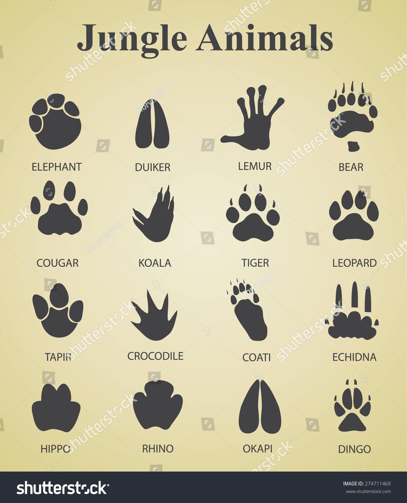 Free Printable Worksheet Animal Tracks
