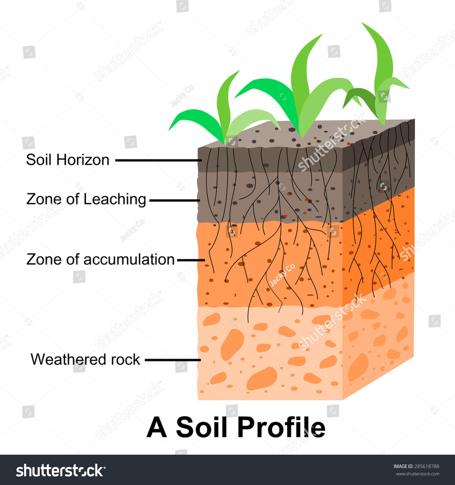 Worksheet Soil Horizons Worksheet Grass Fedjp Worksheet