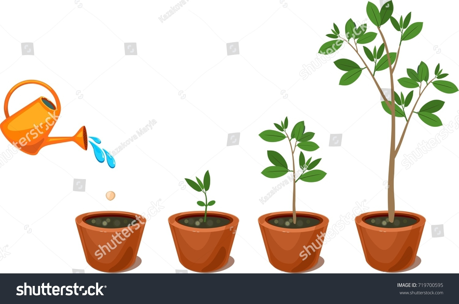 Stages Growth Tree Seed Watering Plants Stock Vector