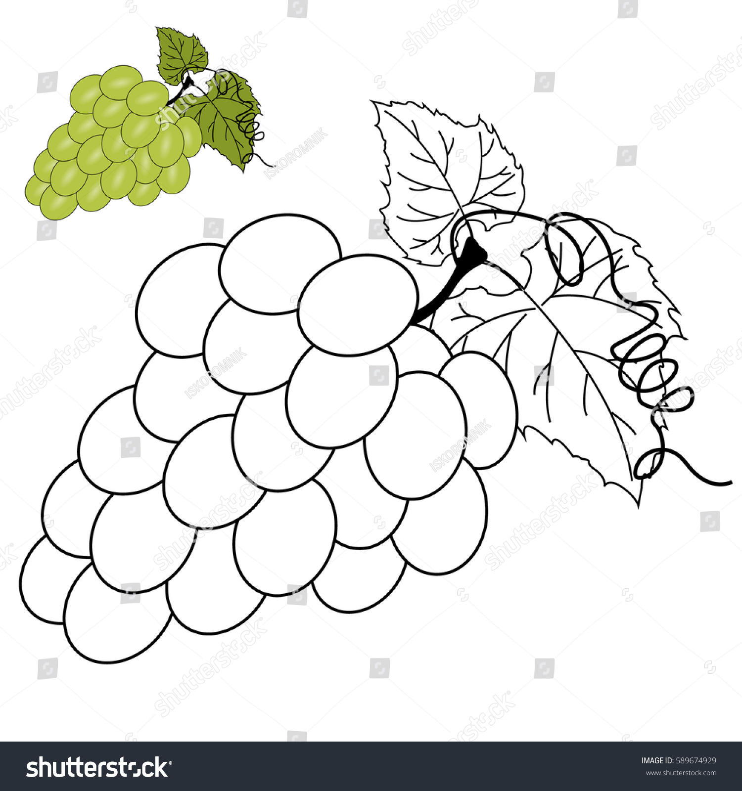 Vector Coloring Page Children Grapes Stock Vector 589674929