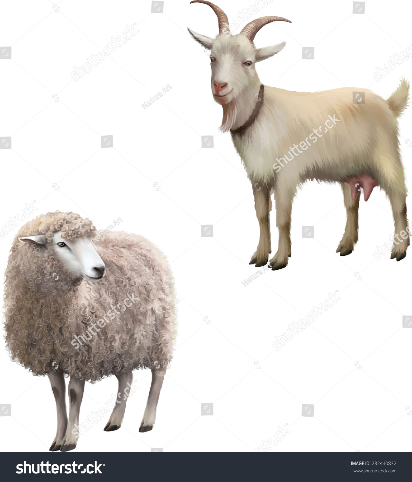 Vector Illustration Of Front View Of A Sheep Looking Away