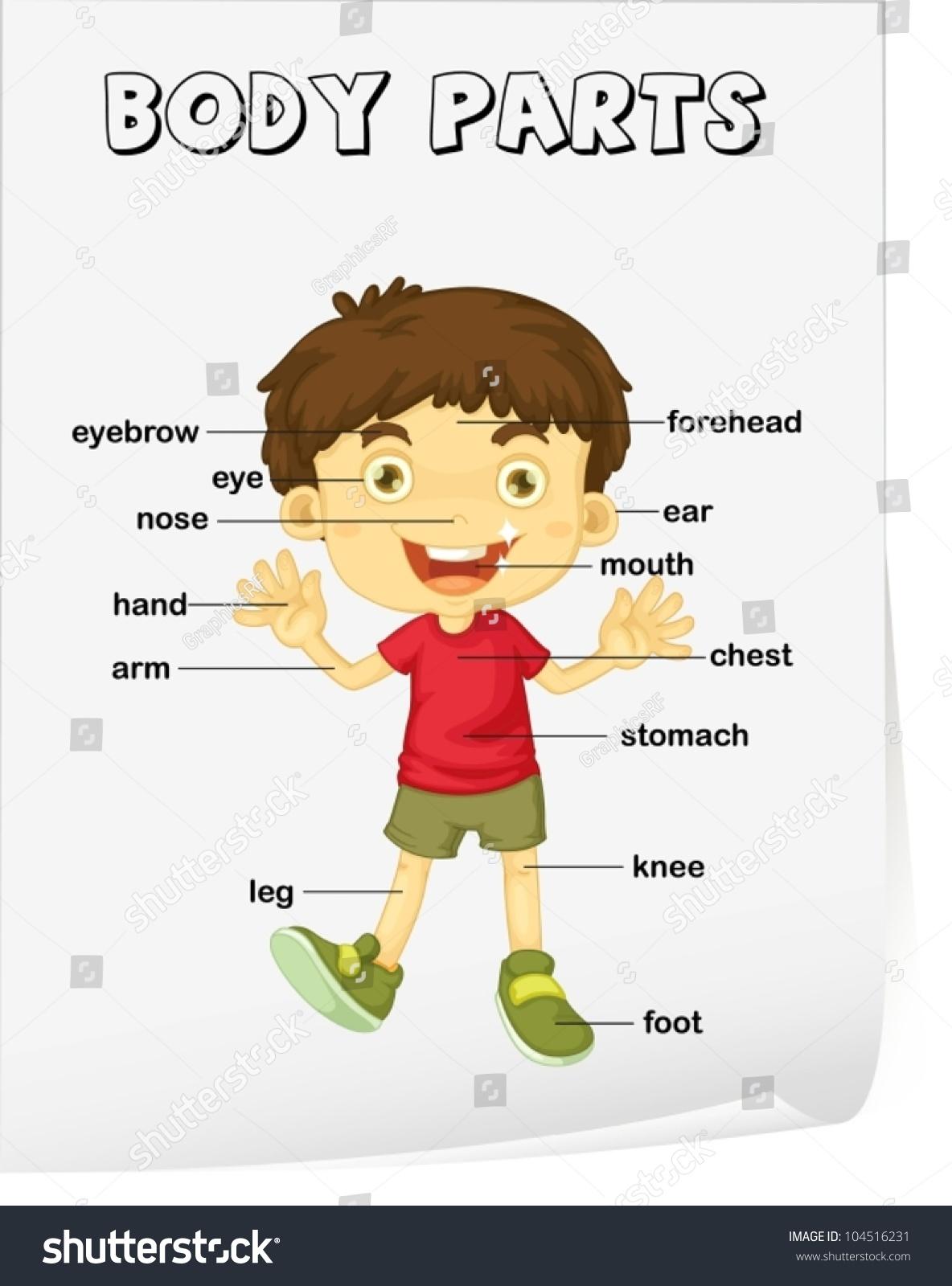 Vocabulary Worksheet Parts Body Stock Vector