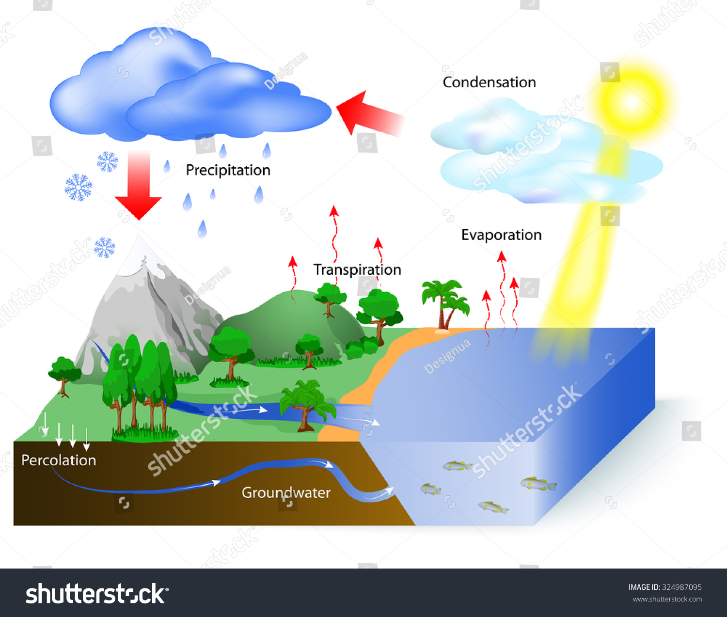 Water Cycle Diagram Sun Which Drives Stock Vector