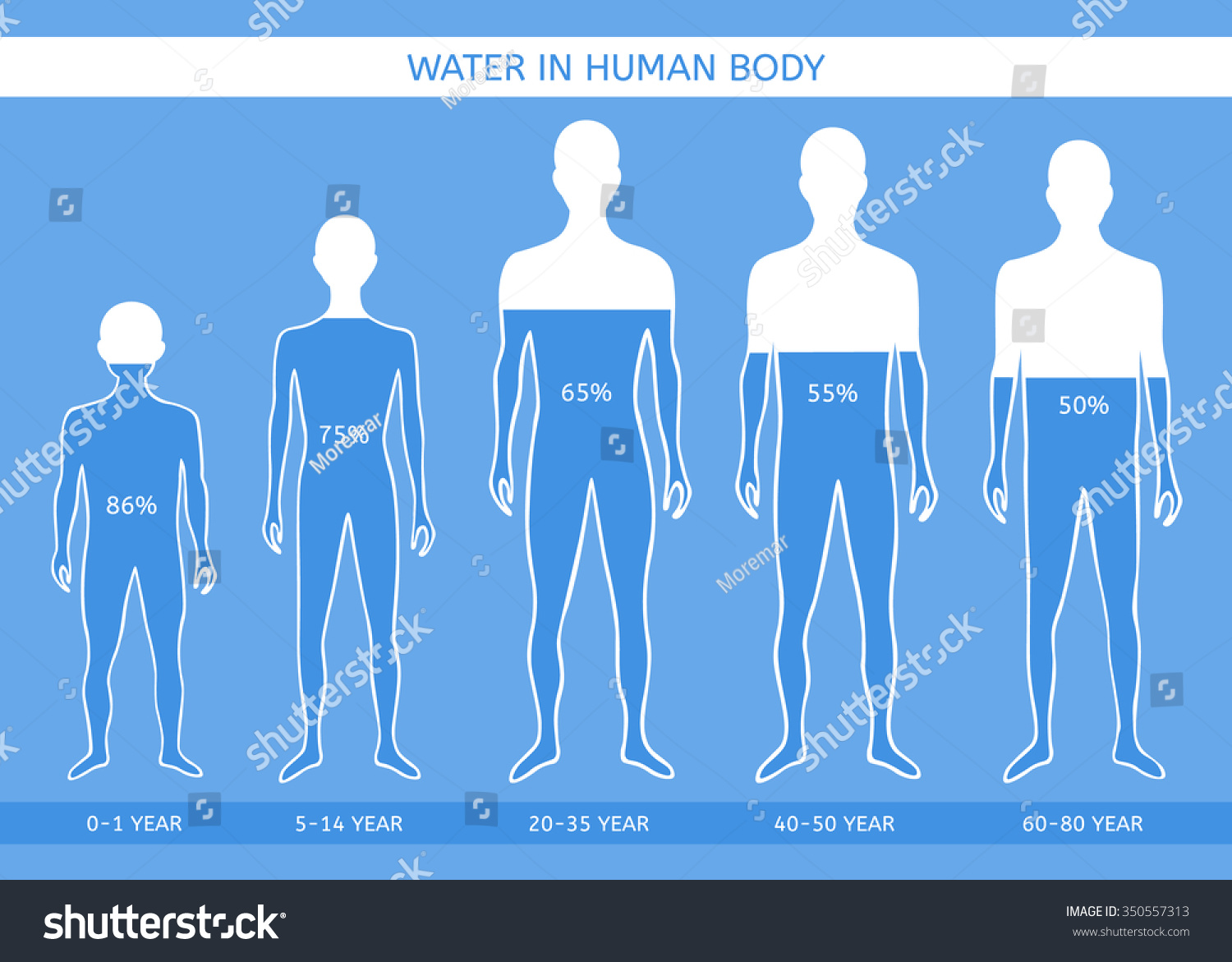 Water Human Body Man Different Ages Stock Vector