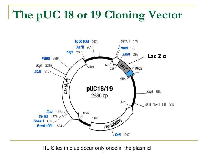 PPT - Cloning into Plasmids PowerPoint Presentation - ID